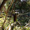 シアトルで強風。裏庭で倒木!