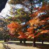 紅葉独り占め、野川公園