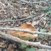 秋には森へ