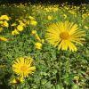 春のオランダはお花でいっぱい